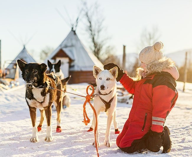 Travel Adventure by Sled Dog